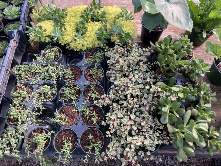 Assorted house plants and succulents