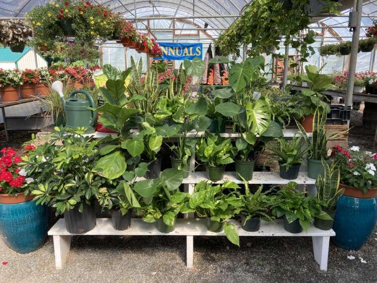 Assortment of house plants