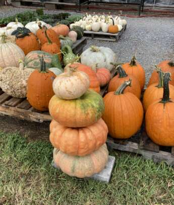 Stack of gourds surrounded by pumpkins