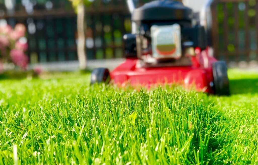 Best Time To Mow