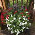 Maintaining Containers During Summer
