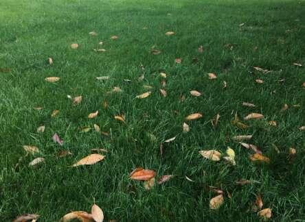 Fall Lawn Seeding